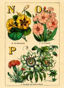 N for Nasturtium O for Oleander P for Pink and Passion-Flower