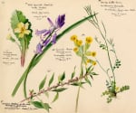 Wildflower Composite XI