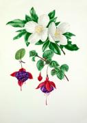 Eucryphia x nymansensis, Fuchsia 'Mount Stewart' by Graham Stuart Thomas