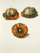 Plate 11 by Jean Charles Verbrugge