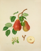 The Scarlet Bueree Pear
