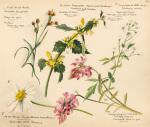 Wildflower Composite Plate XVI