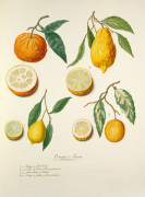 Oranges et Limons