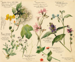 Wild Flowers Composite (Tunbridge Wells)