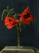 Red Poppies in Vase by William van Sommer