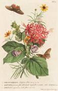 1.Ceratocephalus 2. Martynia 3. Narcissus