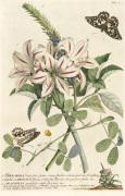 1.Sherardia 2. Lilio-Narcissus 3. Arachidna