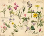 Wildflower Composite IV