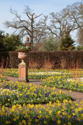 The Walled Garden Wisley in Spring by Carol Sheppard