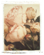 Country Rose by Deborah Schenck