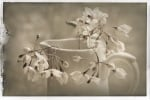 Cruche et Fleur de Printemps 2