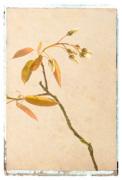 Vintage Twig by Deborah Schenck