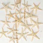 Wild Starfish