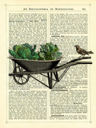 Wheelbarrow Lettuce and Bird