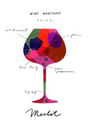 Wine Anatomy: Merlot