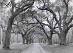 Oak Arches by Jim Morris
