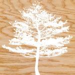 Frosty Tree by Erin Clark