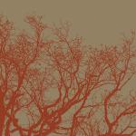 Cinnamon Tree II by Erin Clark