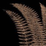 Fern I (on black) by Botanical Series