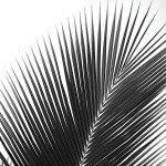 Palms 14 (detail) by Jamie Kingham