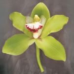 Botanique by Erin Clark