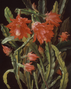 Cactus with Scarlet Blossoms 1884