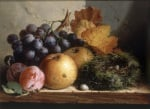 Still Life with Grapes Apples Plums and a Birds Nest
