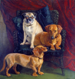 Dachsunds and a Pug