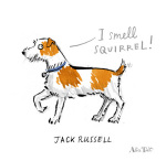 Jack Russell by Alice Tait