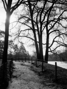 Winter Trees Paris 1963