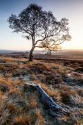 Lone Tree Derbyshire
