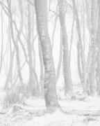 Woodland Blizzard