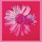 Daisy, c.1982 (crimson & pink) by Andy Warhol