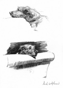 Sketches of an Irish Wolfhound 1939