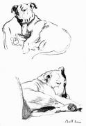Bull Terrier 1939