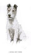 Fox Terrier 1930