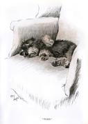 Dachshund puppy 1930