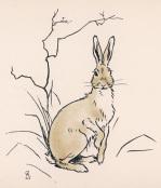 Alert Hare 1902