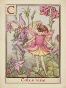 Columbine Fairy