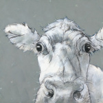 Cow on Grey