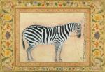 A zebra 1621