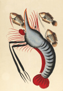 Prawn with three fishes c.1940