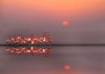 Purple Sunset by Anna Cseresnjes