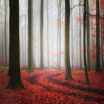 Autumnal Tracks by Carsten Meyerdierks