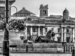 Trafalgar Lions