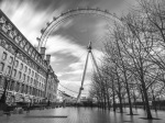 Bare Trees and the Wheel by Assaf Frank