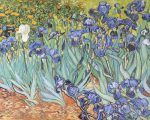 Irises in the Garden