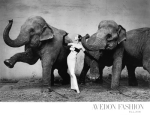 Dovima with elephants 1955
