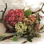 Hydrangeas by Catherine Beyler