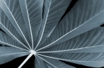 Palm Leaf - Petrol Blue by Richard Osbourne